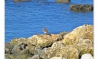 The Forlorn Bird