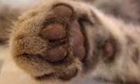 Jumblefluff Paws