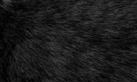 Black Poem