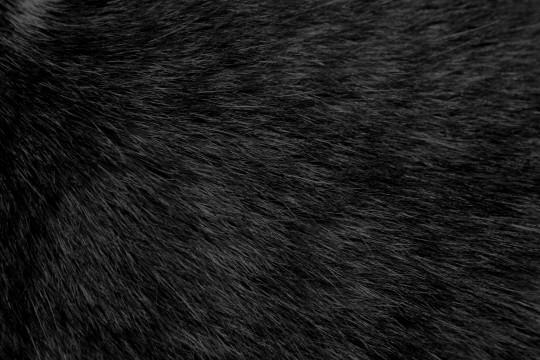 black-cat-fur-texture